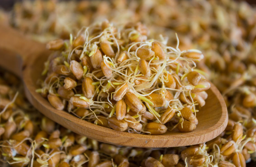 sprouted whole grains